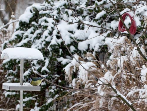 Pasarile le hranim pe timp de iarna.