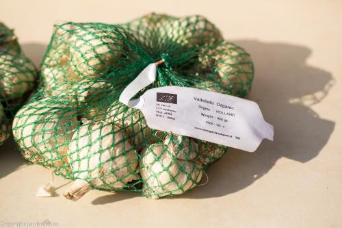 Usturoi ecologic soiul Vallelado