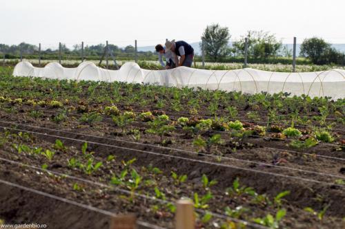 Se conturează grădina cu legume