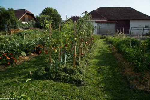 Aplicam principii din permacultura  - straturi mulcite cu iarba