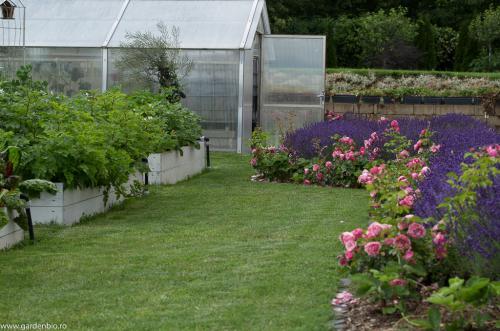 Gradina de legume si strat de lavanda Hidcote cu trandafiri Leonardo da Vinci