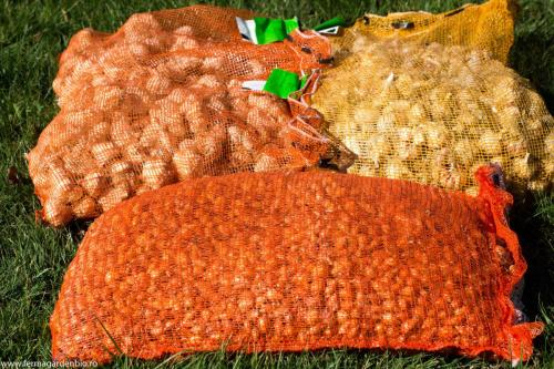 Arpagic și usturoi certificate ecologic pentru semănatul de toamnă