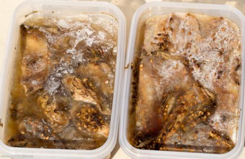 Punem 3-4 zile la fermentat pulpa de vinete pentru seminte. Bacteriile formate prin fermentare previn aparitia bolilor la viitoarele plante.