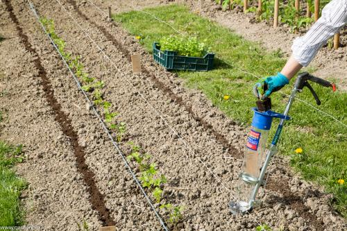 Plantam primele rasaduri