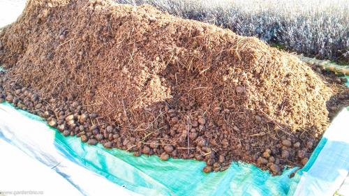 Din ianuarie pregatim rasadnitele . Aducem gunoi de cal pentru rasadnita in pat cald.