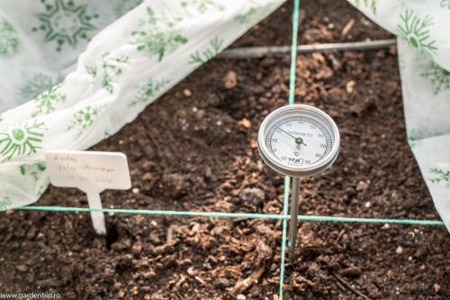 Patul cald incepe sa lucreze, iar in cateva zile temperatura din sol ajunge la peste 25 grade Celsius