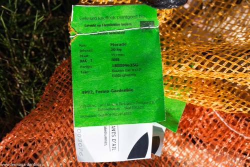 Usturoi certificat ecologic pentru sămânță